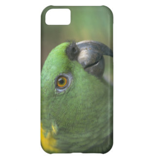 Cute iPhone 5 Cases yellow and Green Parrot