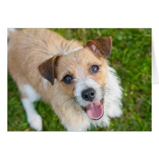 Cute Jack Russell terrier card
