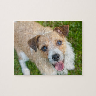 Cute Jack Russell terrier dog photo jigsaw puzzle