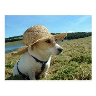 Cute Jack Russell wearing a sun hat in field Postcard