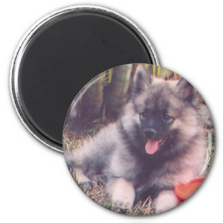 Cute Keeshond Puppy Magnet