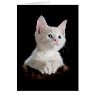 Cute Kitten Basic Blank Card