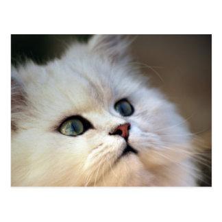 Cute kitten face postcard