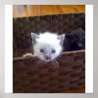 Cute Kitten In Basket Poster