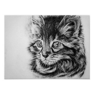 Cute kitten in charcoal poster