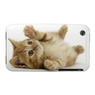 Cute Kitten iPhone 3 Case-Mate Case