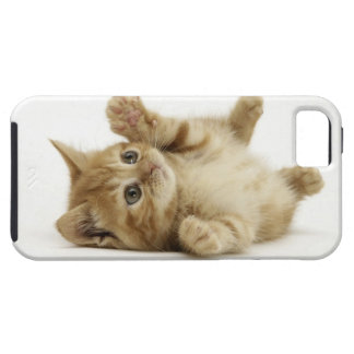 Cute Kitten iPhone 5 Cover