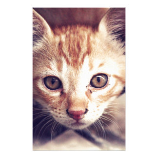 Cute Kitten looking at YOU Customized Stationery