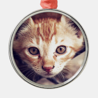 Cute Kitten looking at YOU Silver-Colored Round Ornament