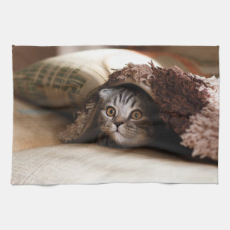 Cute kitten looking from sofa kitchen towel
