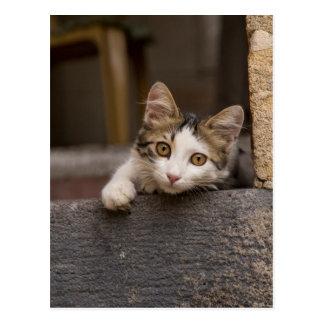 Cute kitten peeking out, Turkey Postcard
