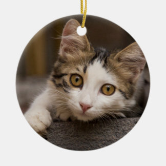Cute kitten peeking out, Turkey Round Ceramic Ornament
