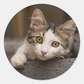 Cute kitten peeking out, Turkey Round Sticker