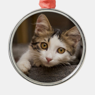 Cute kitten peeking out, Turkey Silver-Colored Round Ornament