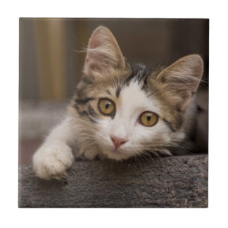 Cute kitten peeking out, Turkey Tile
