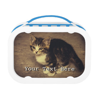 Cute Kitten Photograph, Baby Animal Lunch Box