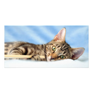 Cute kitten playing photo greeting card