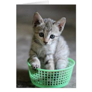 Cute kitten sitting in a green basket cards