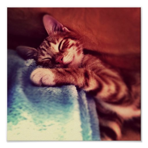 Cute kitten sleeping posters