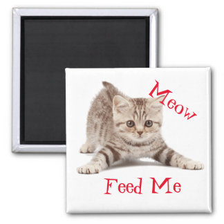 Cute Kitten Square Magnet