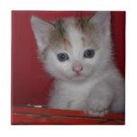 Cute Kitten Tiles