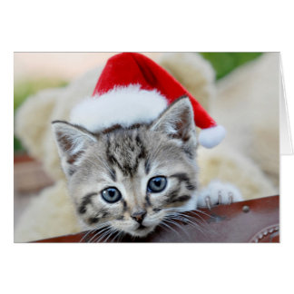Cute kitten with Christmas hat Card
