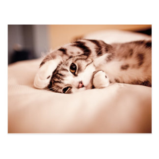 Cute Kitten with Paw over Face Postcard
