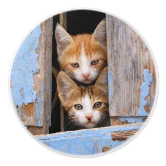 Cute Kittens in a Vintage Window, Decorative Ceramic Knob