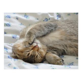 Cute kittin sleeping postcard