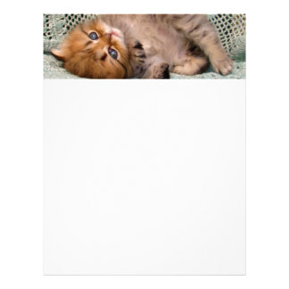 Cute Kitty lying Letterhead