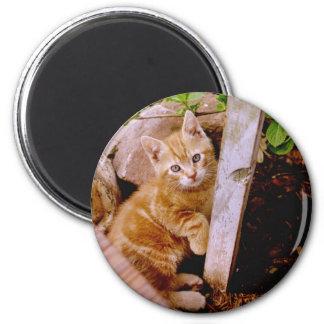 cute kitty magnet