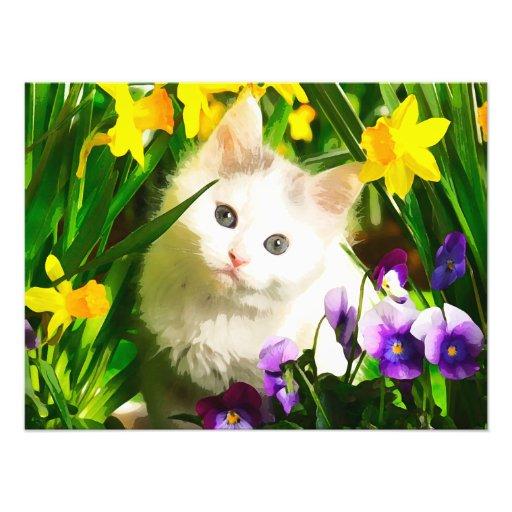 Cute Kitty Photo