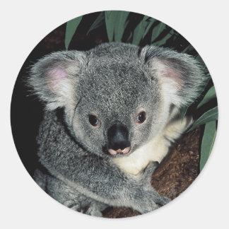 Cute Koala Bear Classic Round Sticker
