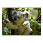 Cute Koala Bear Destiny Nature Aussi Outback Card