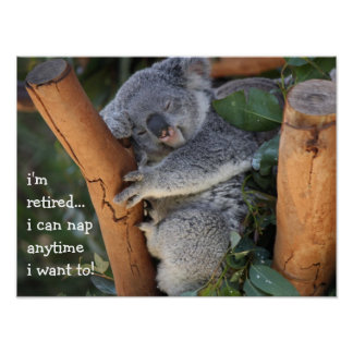 Cute Koala Bear, i'm retired, i can nap anytime!! Poster