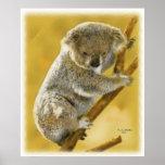 Cute...Koala Bear...Poster and Print!