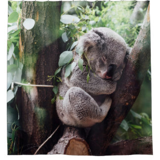 Cute Koala Bear relaxing in a Tree