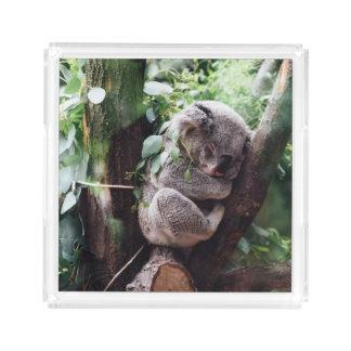Cute Koala Bear relaxing in a Tree Acrylic Tray