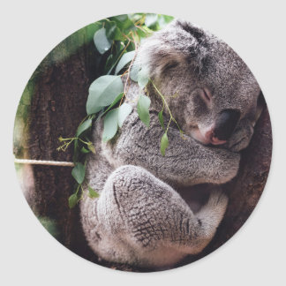 Cute Koala Bear relaxing in a Tree Classic Round Sticker
