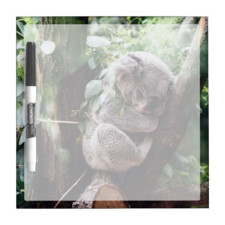 Cute Koala Bear relaxing in a Tree Dry Erase Board