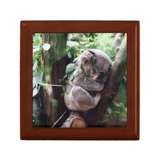 Cute Koala Bear relaxing in a Tree Gift Box