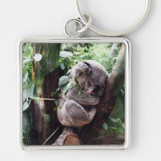 Cute Koala Bear relaxing in a Tree Keychain