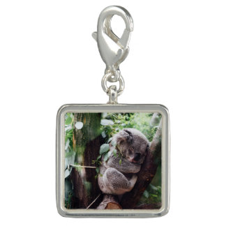 Cute Koala Bear relaxing in a Tree Photo Charm
