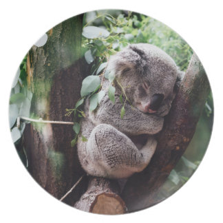 Cute Koala Bear relaxing in a Tree Plate