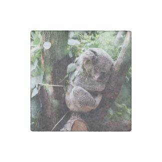 Cute Koala Bear relaxing in a Tree Stone Magnets