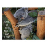 Cute Koala Bear, when all else fails take a nap Poster