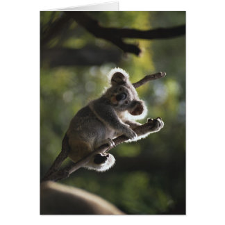 Cute Koala Climbing Card