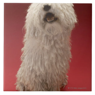 Cute Komondor Dog Tile