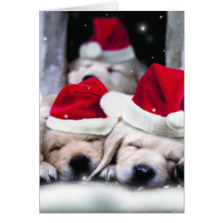 Cute labrador puppies with x-mas hats card
