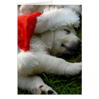 Cute labrador puppy with x-mas hat card